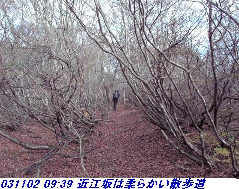031101_03_makino_33kenyama007