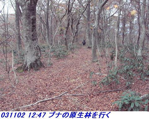 031101_03_makino_33kenyama009