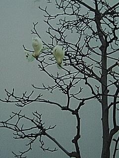 060331 束の間の神戸の春