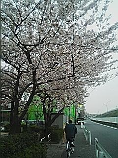 060405 東京は花曇り