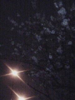 060412 夜桜?
