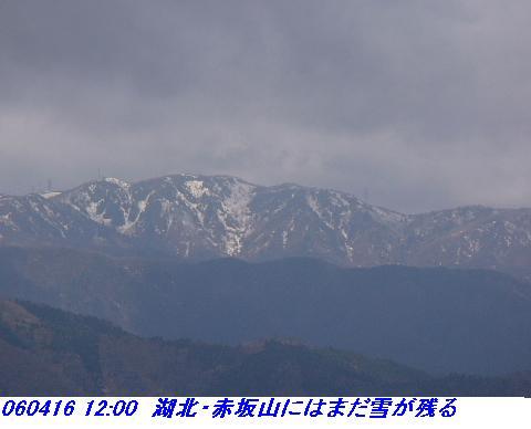 060416_shizugatake_yamamotoyama_021