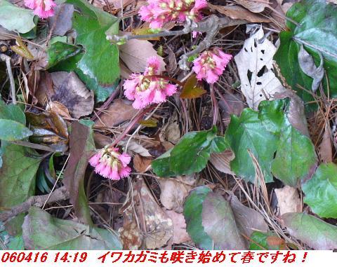 060416_shizugatake_yamamotoyama_027
