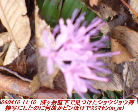 060416_shizugatake_yamamotoyama_037