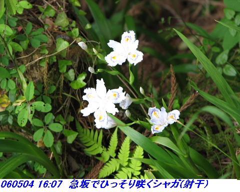 060503_05_koheji_054