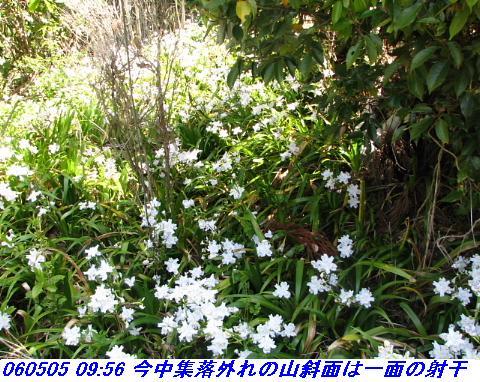060503_05_koheji_069