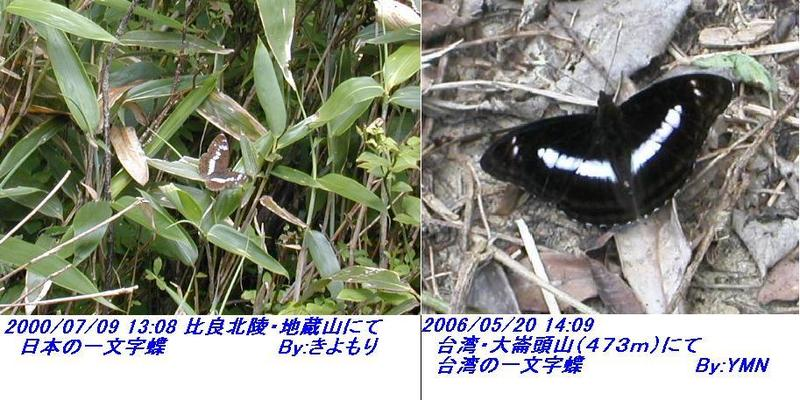 060524_itimonjityo_niti_vs_tai_hikaku