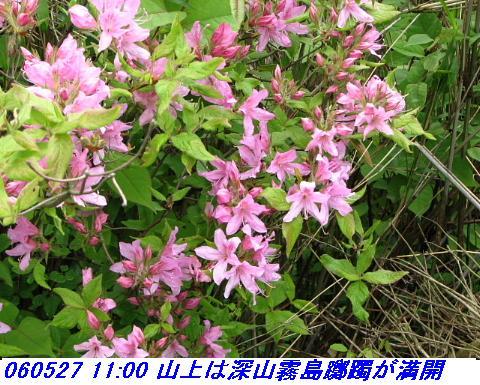 060527_kouzansyokubutuen_002