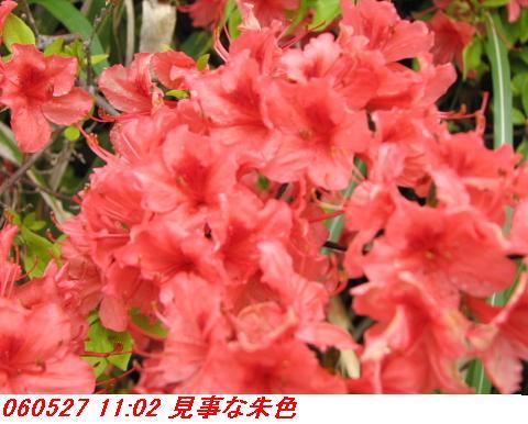 060527_kouzansyokubutuen_003