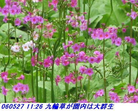060527_kouzansyokubutuen_005