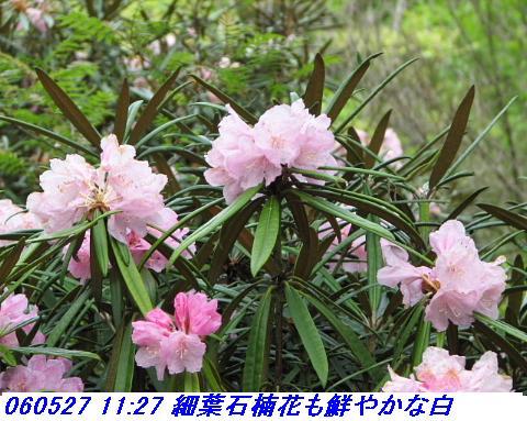 060527_kouzansyokubutuen_006