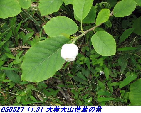 060527_kouzansyokubutuen_007