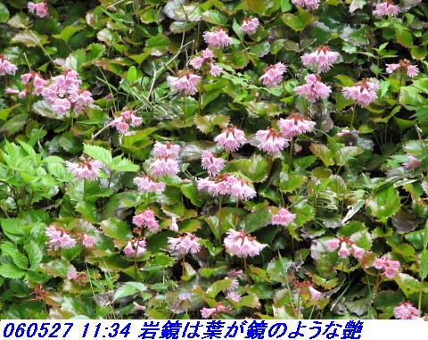 060527_kouzansyokubutuen_008