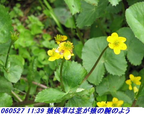 060527_kouzansyokubutuen_009