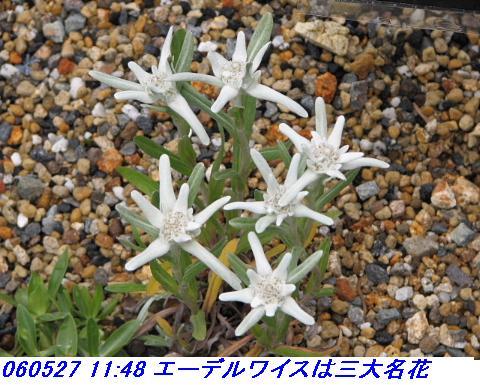 060527_kouzansyokubutuen_010