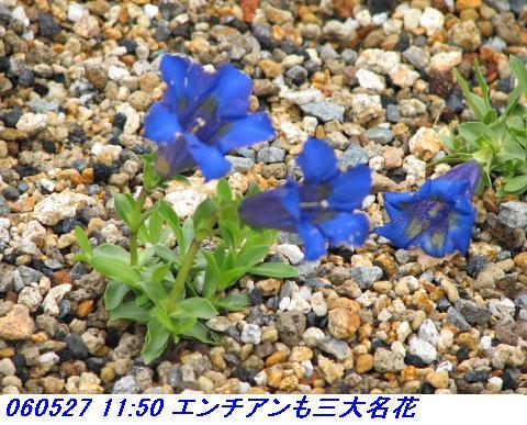 060527_kouzansyokubutuen_011
