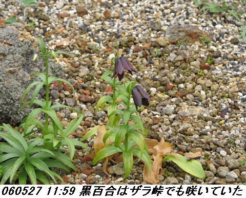 060527_kouzansyokubutuen_012