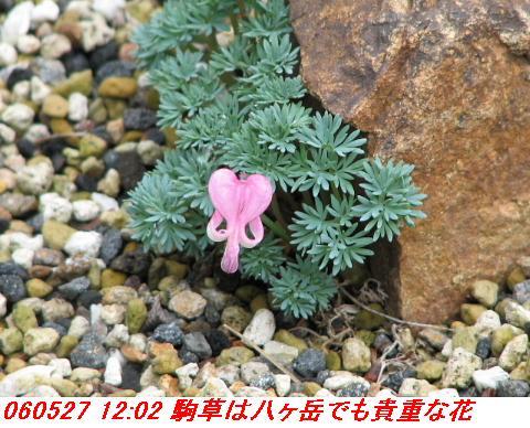 060527_kouzansyokubutuen_013