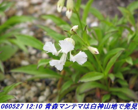 060527_kouzansyokubutuen_014