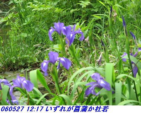 060527_kouzansyokubutuen_016