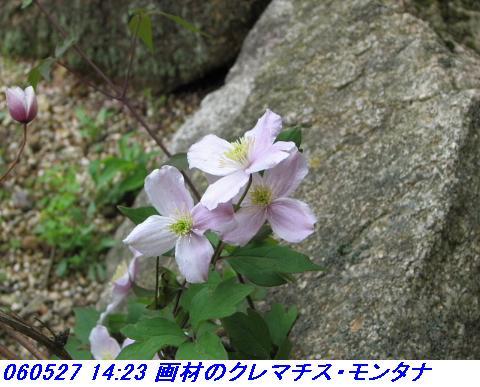 060527_kouzansyokubutuen_018