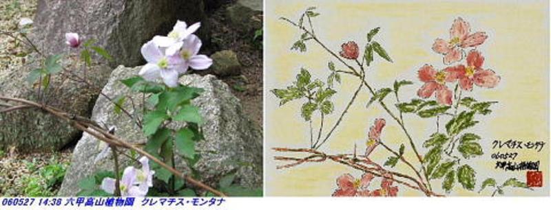 060527_kouzansyokubutuen_020