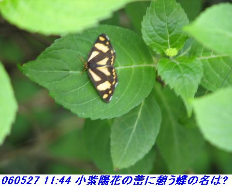 060527_kouzansyokubutuen_021