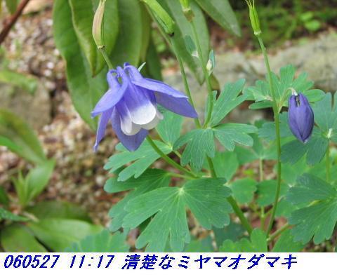 060527_kozansyokubutuen004syusei