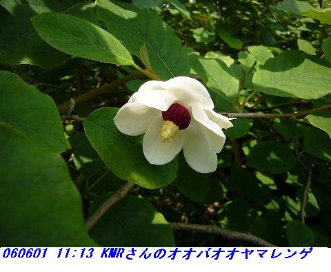 060601_kmr_kozansyokubutuen_003