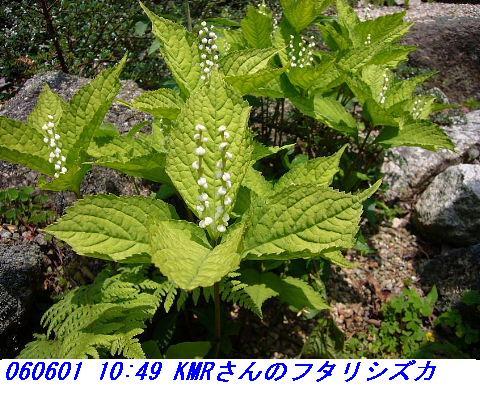 060601_kmr_kozansyokubutuen_004