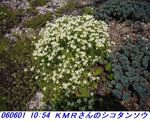 060601_kmr_kozansyokubutuen_005