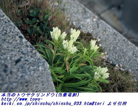060601_touyakurindo