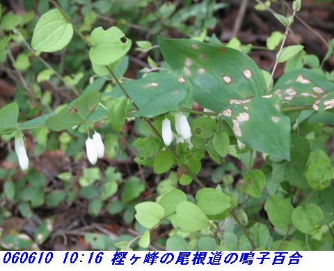 060610_kashigamine_akagotani_004