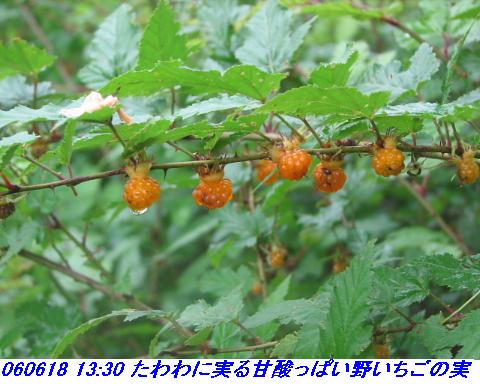 060618_otowayama_015