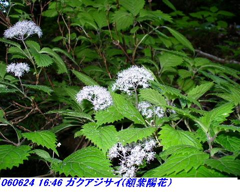 060624_25_kankeikaishitami_028_1