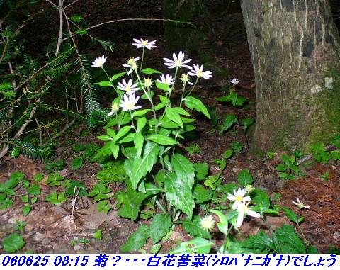060624_25_kankeikaishitami_045