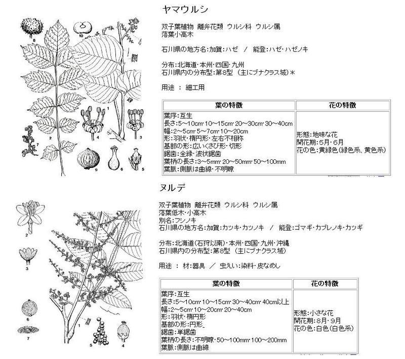 060728_urushi_nurude