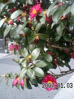 070103 下町の新春