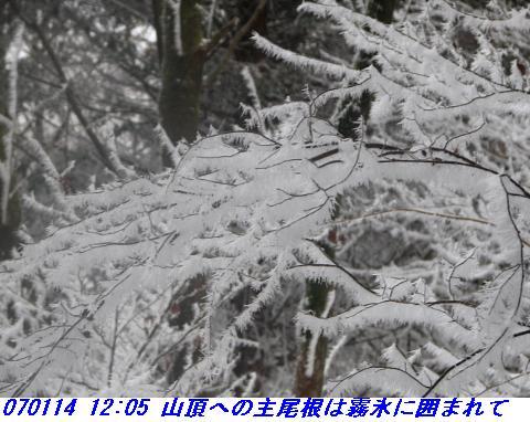 070114_miuneyama_shitami_007