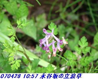070428_30_jyakutanrr2_nagatanisaka_yokoo