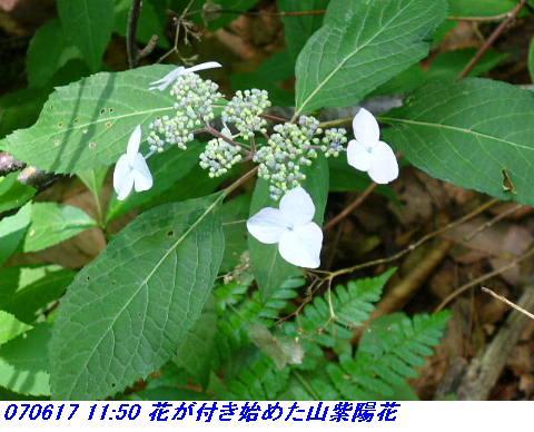 070617_iwakomoriyama_008