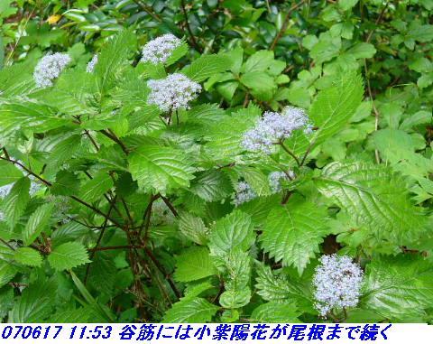 070617_iwakomoriyama_009