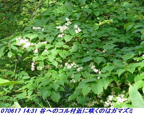 070617_iwakomoriyama_020