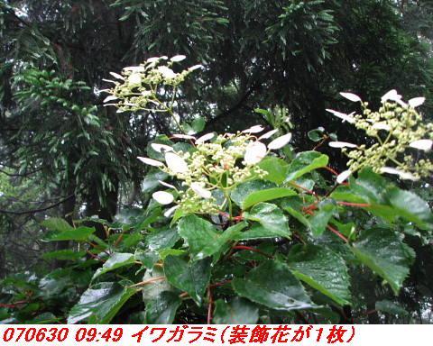 070630_0701_gonami_kutuki003