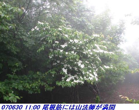 070630_0701_gonami_kutuki006