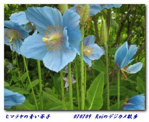 070709_reikosan_himarayanokeshi