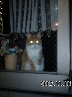 071107 飾り窓の猫