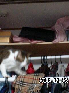 080227 ヤンチャ猫