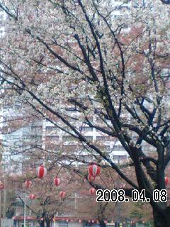 080408 春の嵐
