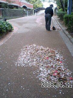 080411 花びらの絨毯
